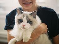 可爱猫咪卖萌图片头像