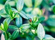 桌面壁纸唯美小清新绿色植物赏析