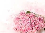 浪漫唯美粉玫瑰花束摄影大图