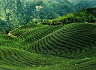 美丽的乡村田园风光绿意盎然