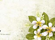 手绘韩国插画素雅白色花朵图片素材