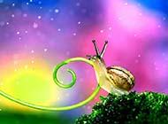 1366x768高清小蜗牛爬行经典壁纸