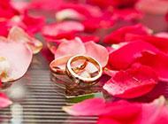 红色玫瑰花背景浪漫优雅