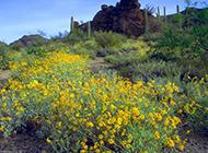 漫山遍野的野菊花图片