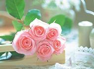 粉玫瑰花图片唯美情人节空间素材
