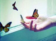 指尖上的蝴蝶唯美意境图片