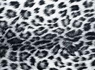 黑白色豹纹野性精美背景图片