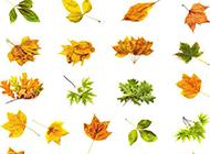 秋天黄色叶子图片大全背景
