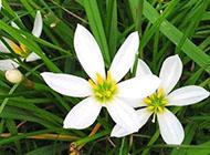 文艺范唯美意境个性花卉图片素材大全