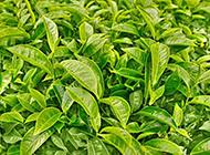 绿色植物背景图素材分享