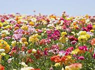 鲜花浪漫花海图片背景