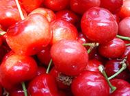 营养丰富的樱桃图片