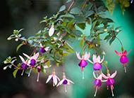 紫色花图片高清背景素材