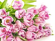 淡粉色娇美玫瑰花唯美大图