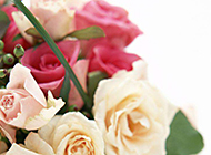 情人节粉嫩玫瑰花束图片