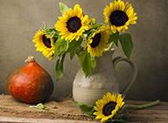 植物图片向日葵唯美静物摄影壁纸