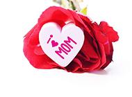 母亲节浪漫告白甜美玫瑰个性背景素材