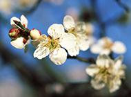 春日唯美鲜花浪漫风景美图