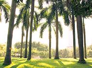 福建棕榈树图片壁纸精选