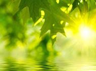 阳光与绿叶唯美图片素材