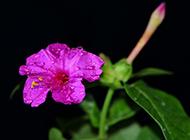 美艳花卉近拍唯美图片