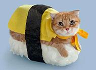 创意猫咪寿司可爱卖萌猫图片