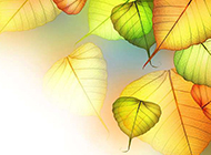 叶子图片素材高清壁纸精选