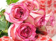 礼盒上的粉玫瑰浪漫礼物