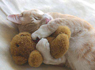 萌宠小猫咪可爱逗趣表情图片精选