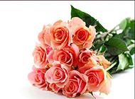 素雅纯净的玫瑰花花束图片欣赏
