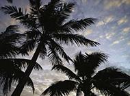海边风景图片 夕阳下的椰树