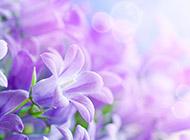 紫色的唯美浪漫花卉图片素材