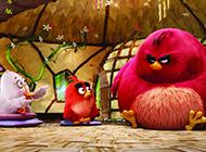 高清唯美卡通壁纸愤怒的小鸟