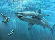 凶猛的鲨鱼1440x900高清壁纸