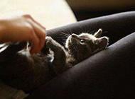萌宠猫咪图片唯美可爱动物壁纸