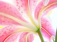 粉嫩花蕊微距摄影