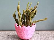 可爱的迷你仙人掌小盆栽图片