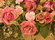 争相斗艳的美丽玫瑰花图片