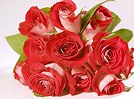 玫瑰花图片唯美花束素材壁纸