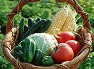 绿色健康诱人蔬菜精选图片