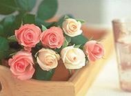 木盒上的玫瑰花唯美图片