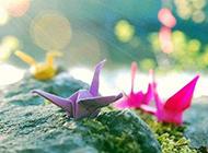 非主流萌图片 五彩斑斓的千纸鹤