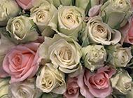 洋桔梗花唯美鲜花背景图片
