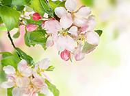花儿与绿叶手机唯美植物图片