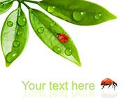 绿色养眼的植物图片素材分享
