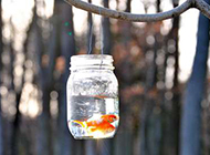 小金鱼意境唯美图片素材欣赏