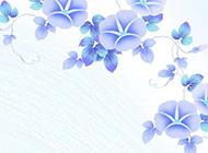 紫色牵牛花鲜花图片素材