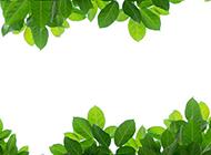 清新绿色树叶植物背景图片边框