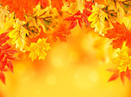 金色灿烂的秋天枫叶壁纸