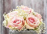 淡雅粉色玫瑰花束唯美图片